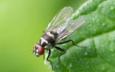昆虫 绿叶图片