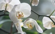 白色花图片