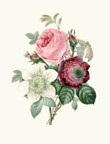 欧式手绘玫瑰花图片