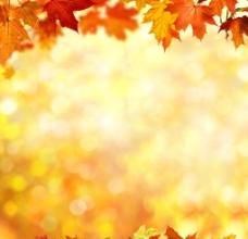 唯美枫叶背景图片