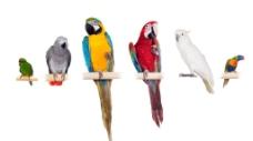 可爱鹦鹉图片