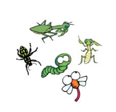 昆虫插画图片
