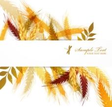 麦穗 秋季图片