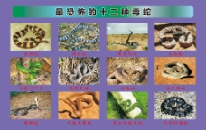 危险的动物图片