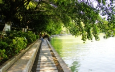 湖边林荫小路图片
