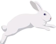 兔子矢量图图片