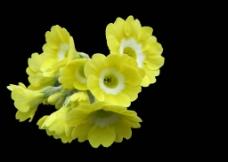 黄色花图片