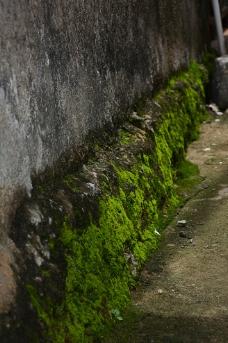 绿苔藓图片