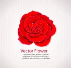 红色矢量玫瑰花团图片