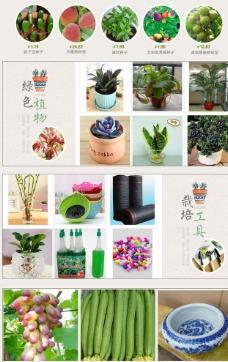 绿色植物 园艺用品 淘宝首页图片