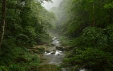 金鞭溪图片