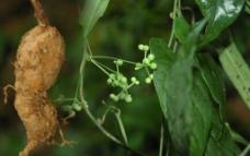 植物根茎图片