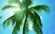 阳光 椰树 蓝天图片