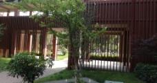 校园秋景图片