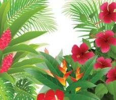 热带花草图片