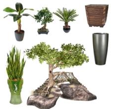 家居绿色植物图片