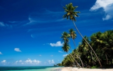 椰子树边的沙滩图片