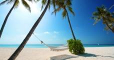 海边沙滩与椰子树图片