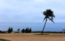 北海银滩棕榈树图片