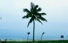 蓝天大海棕榈树图片