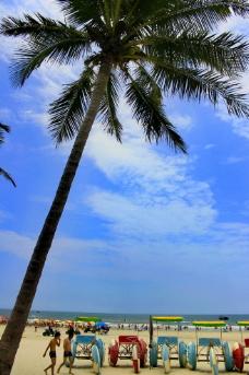 银滩棕榈树图片