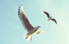 飞翔海鸥鸟类图片