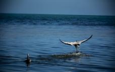 天鹅之旅图片