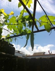 蓝天 瓜棚图片