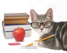 猫咪学习另类图片