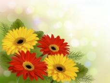 彩色非洲菊背景矢量素材图片