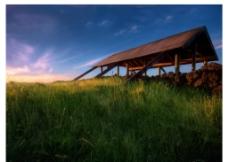 夕阳草地背景图片