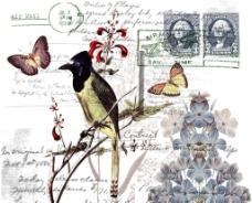 欧美素材  鸟图片