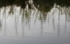 疏枝空挂风落波图片