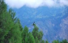 空山喜鹊图片