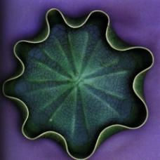 龟裂纹图片
