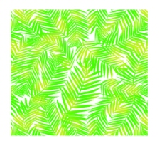 凤尾草散尾草椰树花纹图片