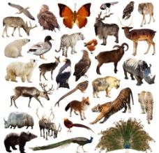 野生动物飞禽高清图片