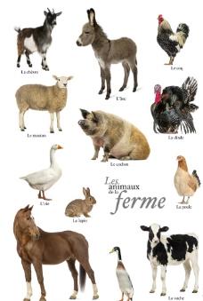常见家禽家畜高清图片