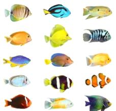 热带鱼高清图片_