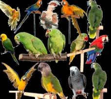 各种鹦鹉图片