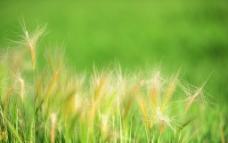 花与草的世界图片