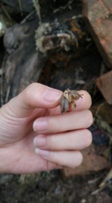手中的蜗牛图片