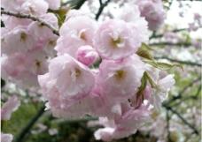粉色花朵摄影图片