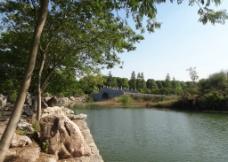 树木石头池塘图片