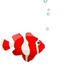 小鱼动态视频