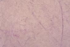 纤维特种纸图片