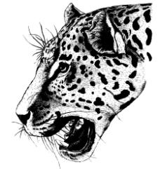 矢量花豹图片