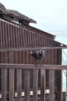鸟 木栅栏图片