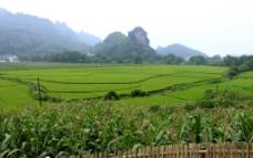 崀山何家村田园景观图片
