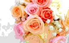 鲜花大图图片